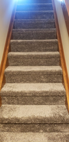Buck-Thorn-Pet-Carpet-Fort-Collins-02