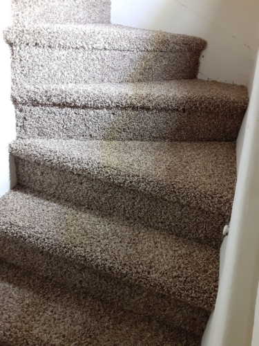 Cobblestone-25oz-Base-Carpet-Fort-Collins-04