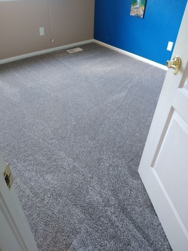 Fleeting-Pawn-Pet-Carpet-Fort-Collins-04