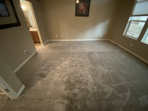 Fleeting-Pawn-Pet-Carpet-Fort-Collins-11