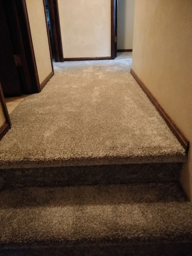 Fleeting-Pawn-Pet-Carpet-Fort-Collins-13