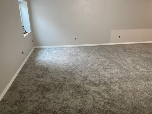 Fleeting-Pawn-Pet-Carpet-Fort-Collins-17