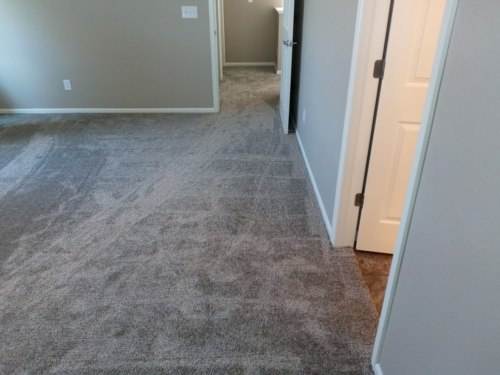 Fleeting-Pawn-Pet-Carpet-Fort-Collins-22