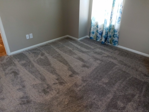 Fleeting-Pawn-Pet-Carpet-Fort-Collins-23