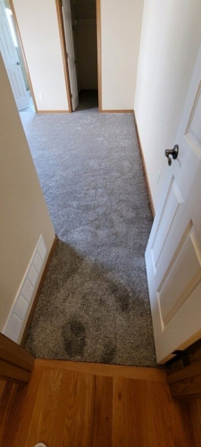 Fleeting-Pawn-Pet-Carpet-Fort-Collins-26