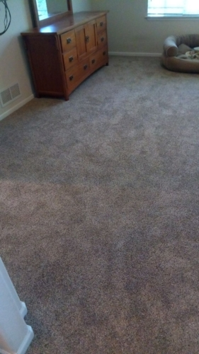 Woodland-Pet-Carpet-Fort-Collins-11
